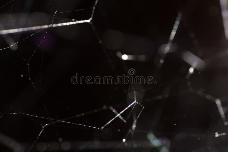 La fin de toile d'araignée vers le haut photos libres de droits