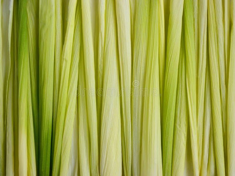 La fin des feuilles d'épi de maïs vert sont étendues verticalement, texture abstraite de fond photos stock