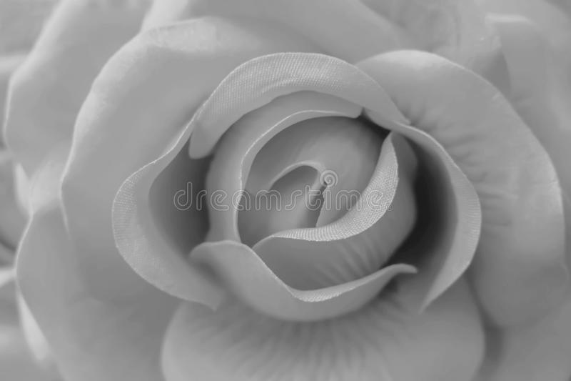 La fin vers le haut de la couleur noire et blanche des fleurs roses faites à partir du tissu est des tons doux doux de pétales de images stock