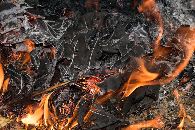 La fin vers le haut de la flamme est brûlante sèchent des feuilles photographie stock libre de droits