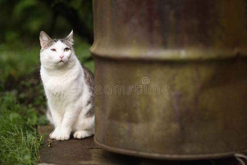 La fine divertente sveglia del gatto sul ritratto con mimose fiorisce fotografie stock libere da diritti