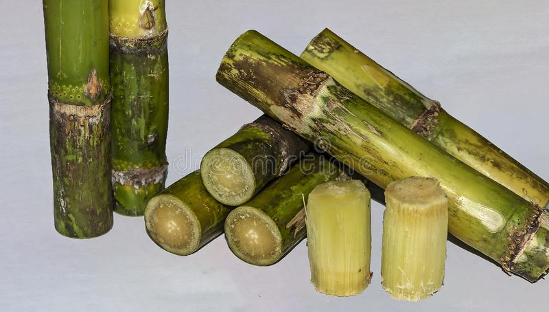 La fine ha tagliato i pezzi di Sugar Cane Isolated On White Background immagine stock libera da diritti