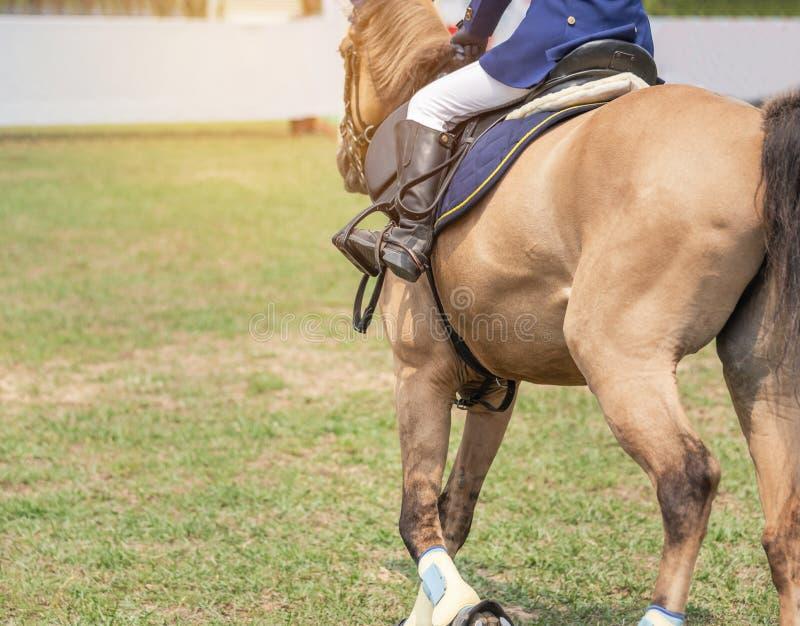 La fine su azione delle gambe del cavallo con gli stivali della protezione durante il riscaldamento di allenamenti prepara la con immagine stock libera da diritti