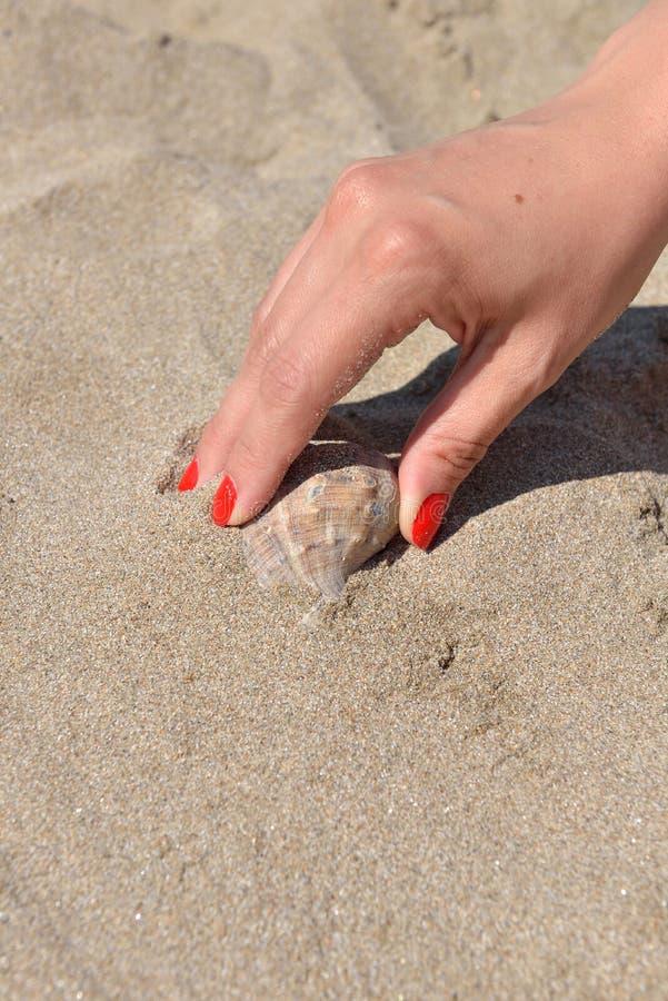 La fine su a disposizione con il manicure rosso trova la conchiglia sulla spiaggia sabbiosa fotografie stock