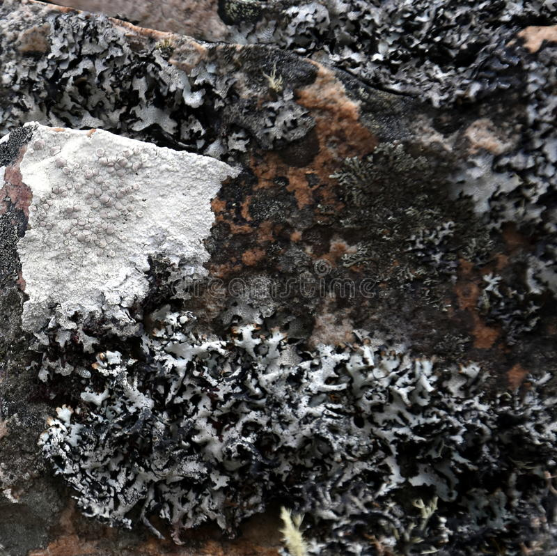 La fine su muschio sulla superficie della roccia fotografie stock