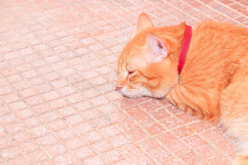 La fine sul gatto dello zenzero si rilassa bello ed adorabile sul mosaico arancio delle mattonelle del pavimento fotografie stock libere da diritti
