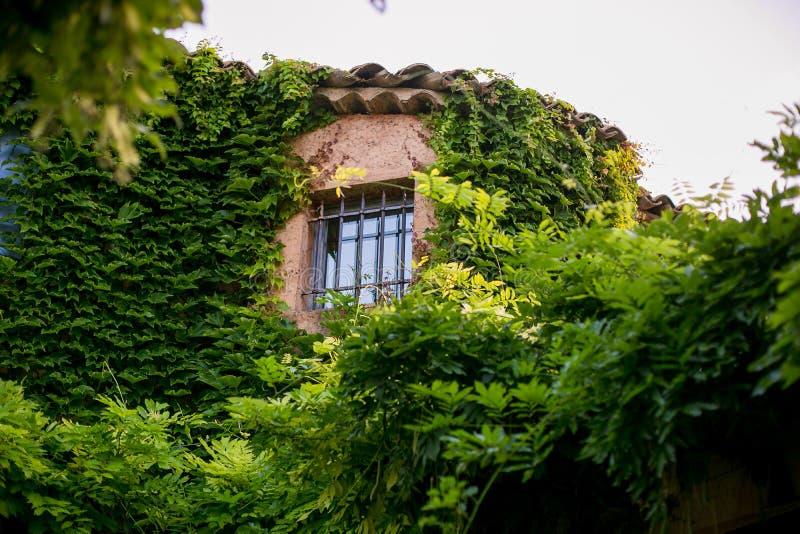 La finestra è appassita in piante immagine stock libera da diritti