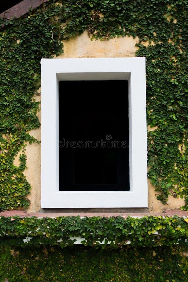 La finestra bianca nel fondo nero con gli alberi del rampicante fotografie stock