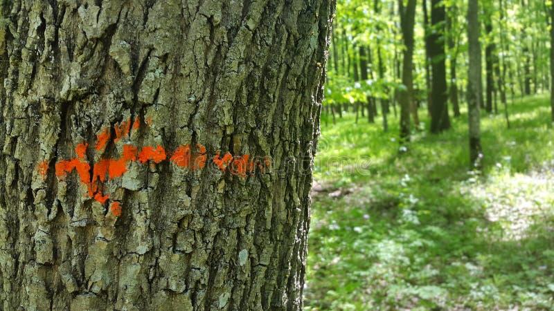 la flecha roja en el árbol fotos de archivo libres de regalías