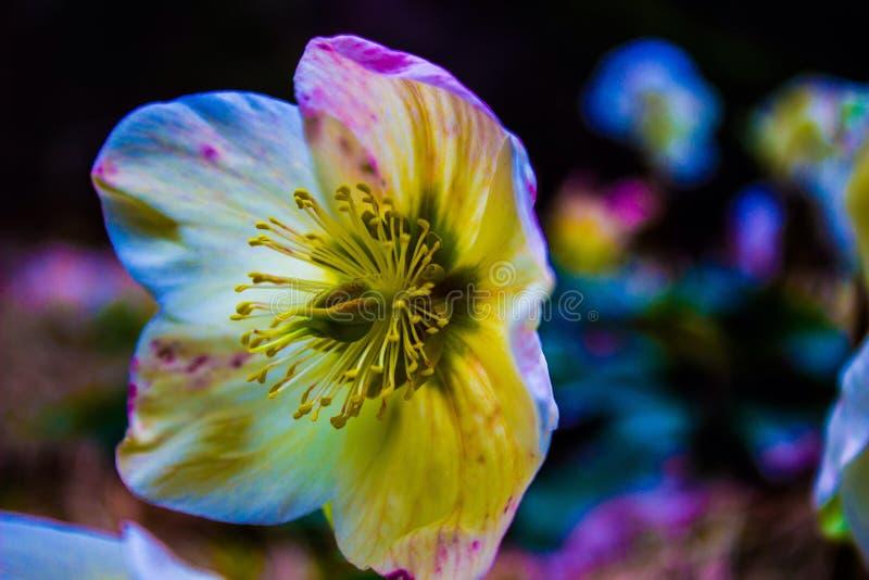 La fleur photographie stock libre de droits