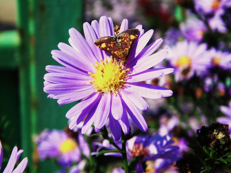La fleur, abeille, pourpre, a flairé, papillon photographie stock