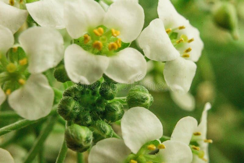 La fleur avec une odeur aiment le miel images stock