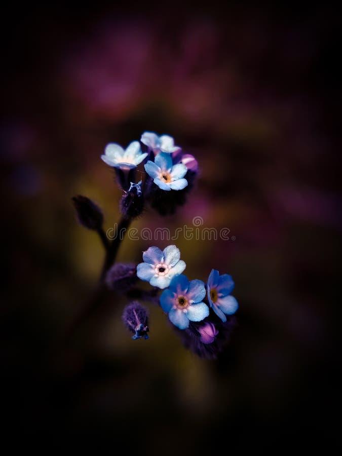 La fleur bleue photo libre de droits