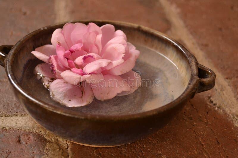 La fleur dans l'eau image stock