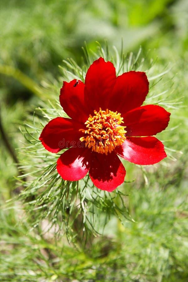 La fleur dans le pré photo stock