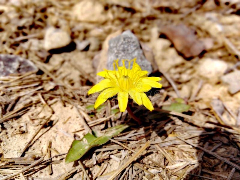 La fleur dans les roches symbolise l'espoir image stock