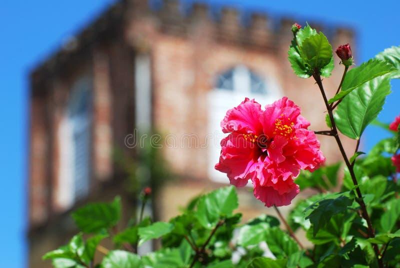 La fleur de cathédrale photo libre de droits
