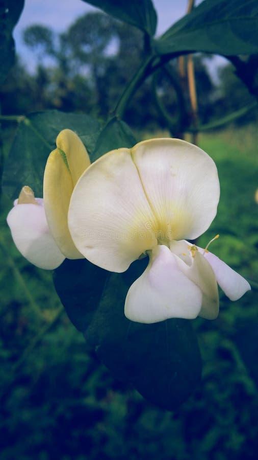 La fleur de floraison photo stock