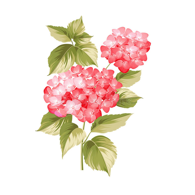 La fleur de Hortensia illustration de vecteur