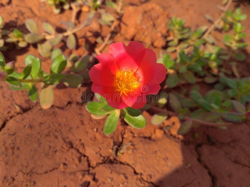 La fleur de matin photos stock