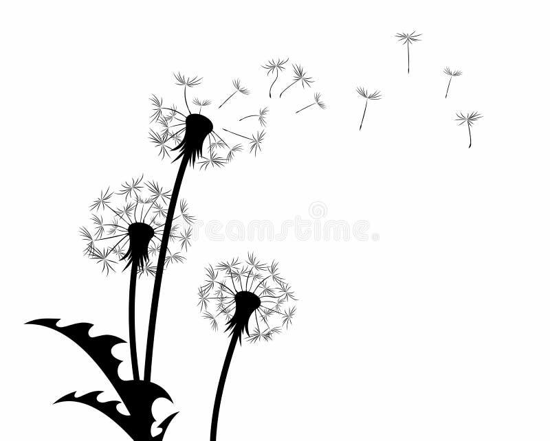 La fleur de pissenlit avec des graines de vol illustration libre de droits