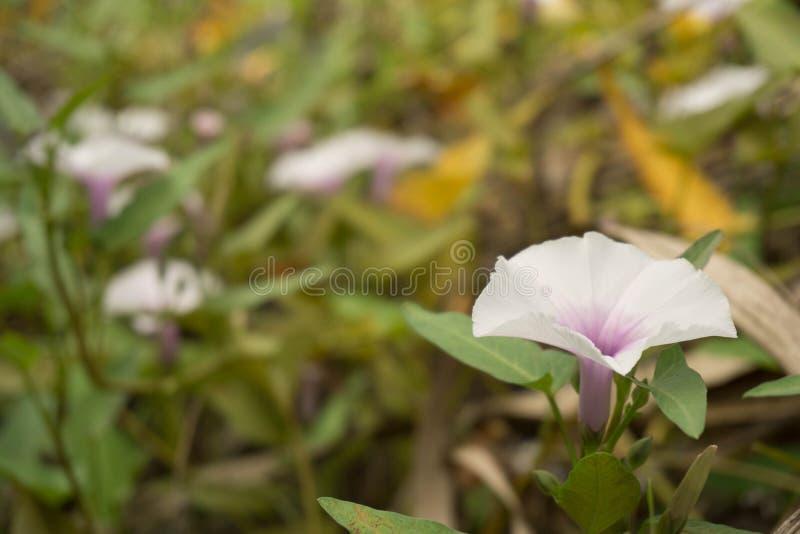 La fleur est belle image stock