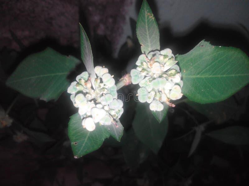 La fleur est l'amant 2 photo libre de droits