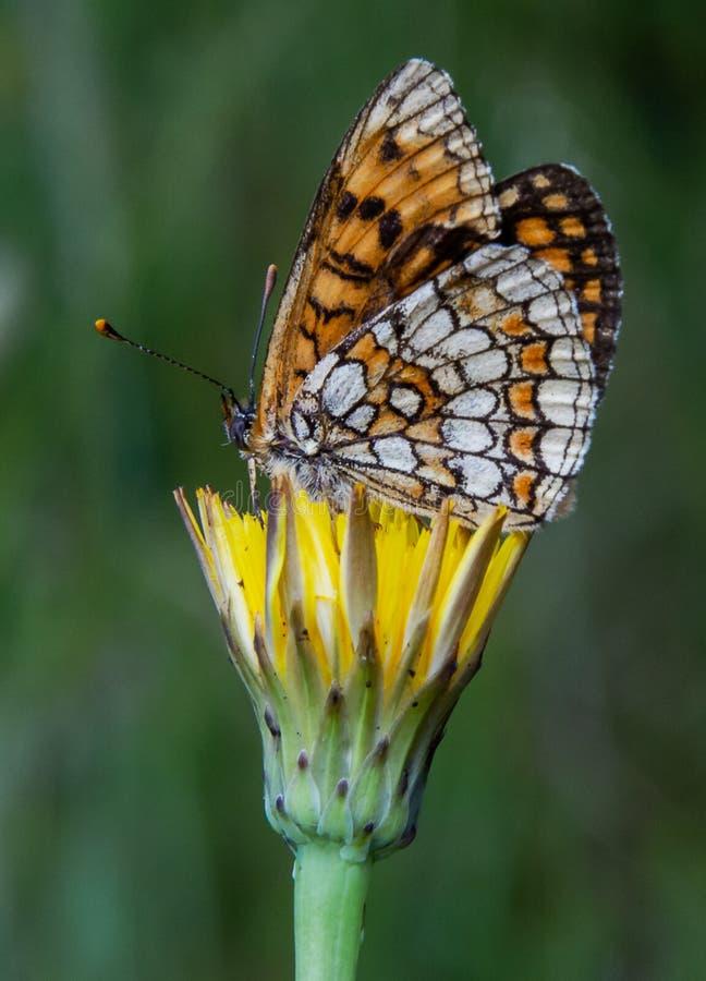 La fleur et le papillon photographie stock