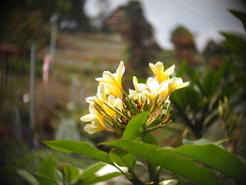 La fleur jaune image stock