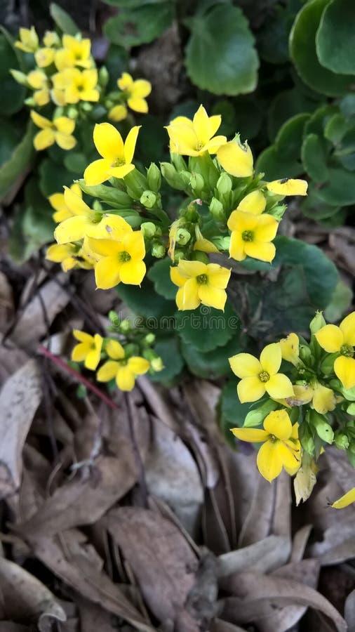 La fleur jaune images stock