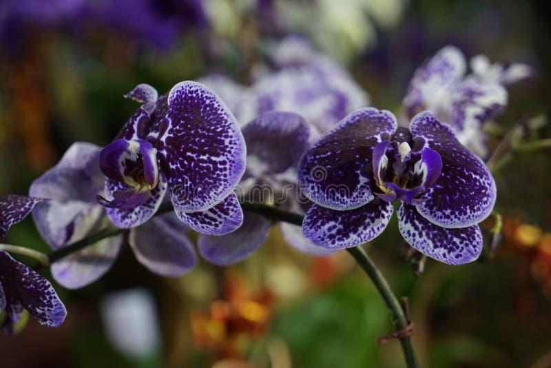 La fleur ouverte apportera la richesse image libre de droits
