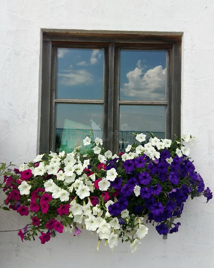 La fleur peut exprimer des happines photographie stock libre de droits