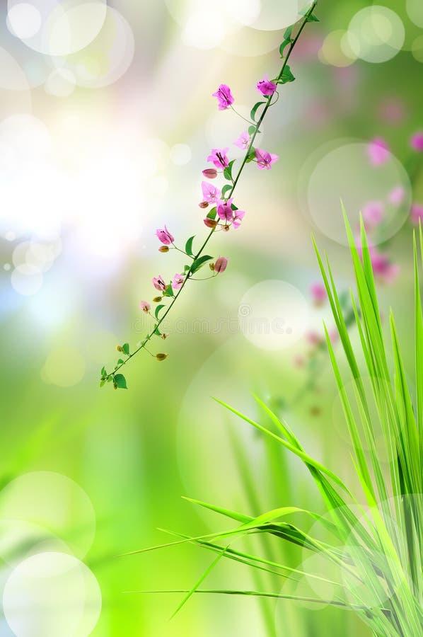 La fleur rose et l'herbe fraîche avec la lumière se reflètent images stock