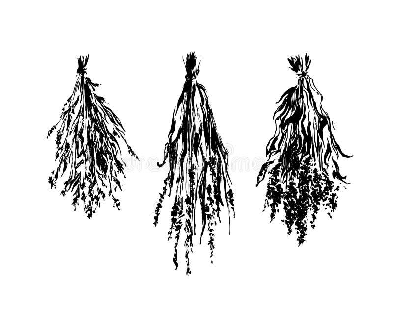 La fleur sèche tirée par la main lie l'illustration de croquis Dessin à l'encre noire de vecteur d'isolement sur le fond blanc St illustration libre de droits