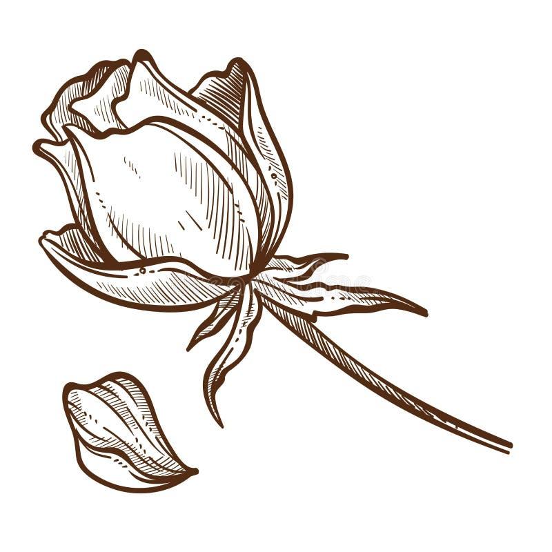 La fleur s'est levée bourgeon et pétale de croquis d'isolement par usines illustration libre de droits
