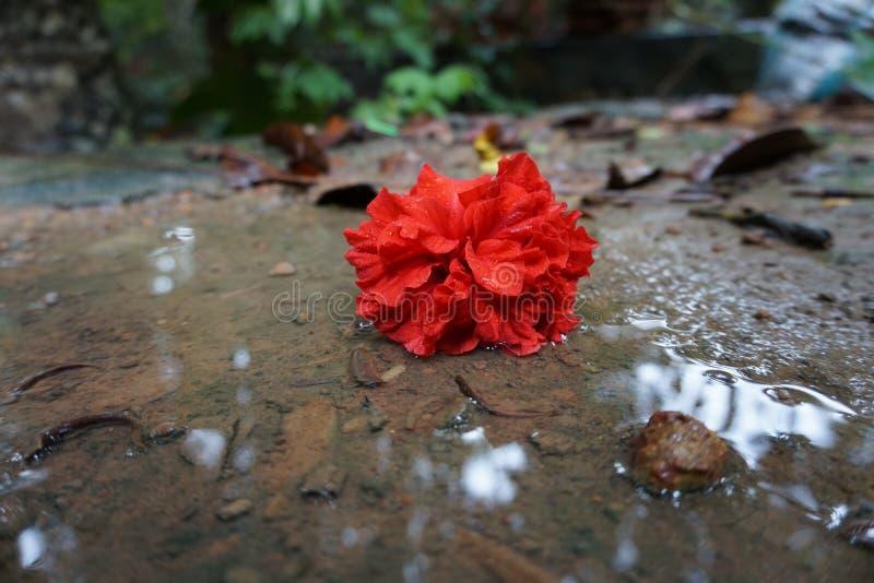 La fleur tomb?e photographie stock libre de droits