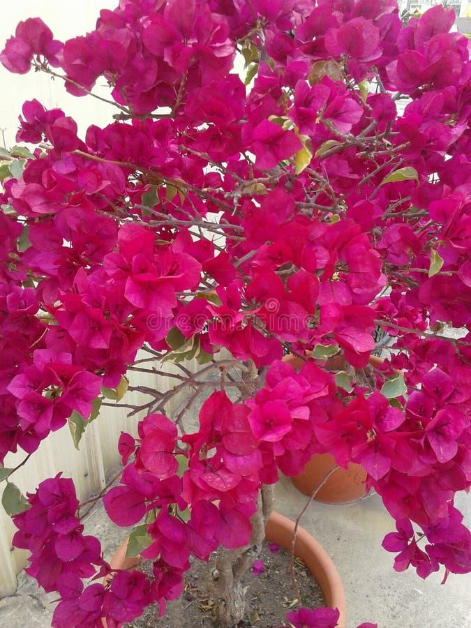 La flor imagenes de archivo