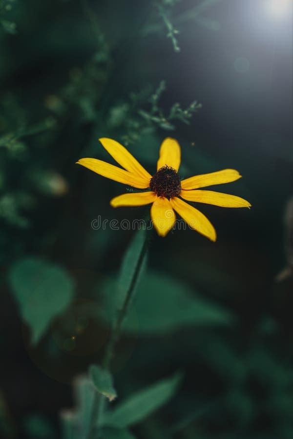 La flor amarilla mágica soñadora del bosque romántico con verde sale del fondo imagenes de archivo