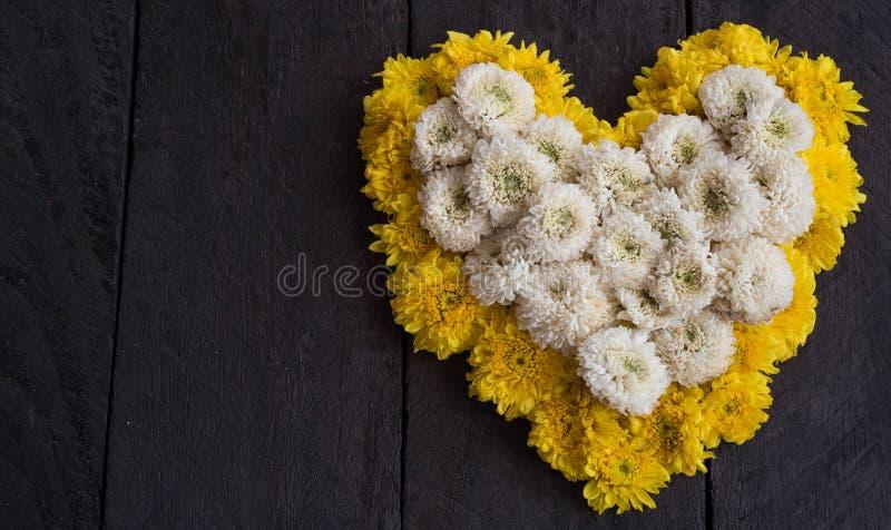 La flor amarilla y blanca del crisantemo formó como un corazón imágenes de archivo libres de regalías