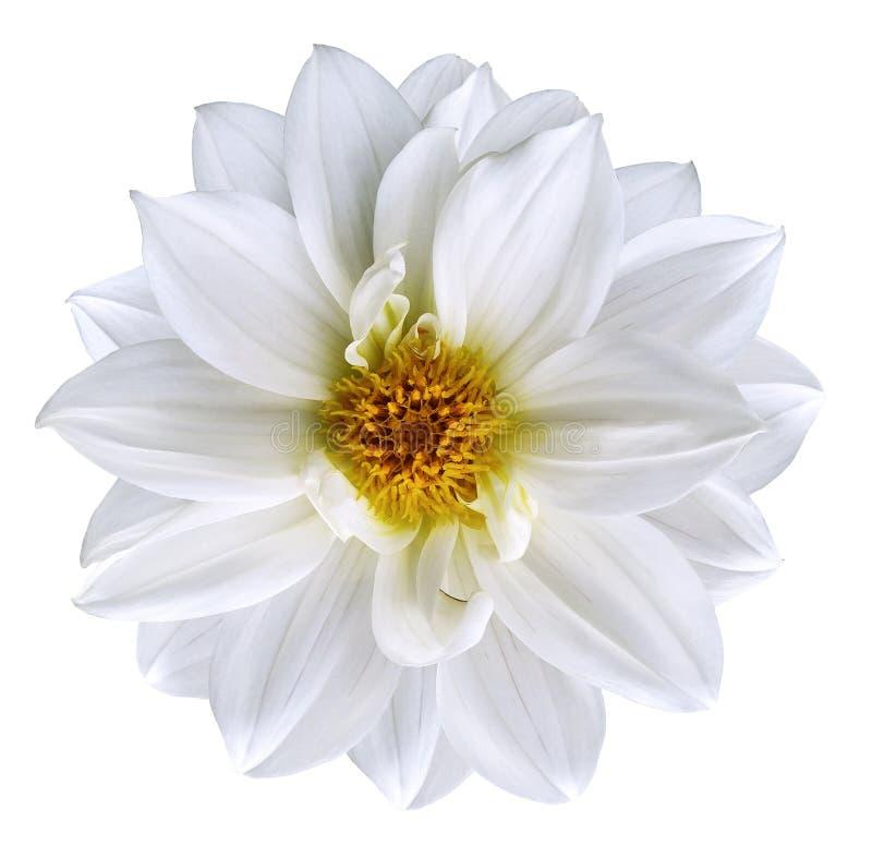 La flor blanca en blanco aislado aisló el fondo con la trayectoria de recortes primer Flor blanca como la nieve hermosa para el d foto de archivo libre de regalías