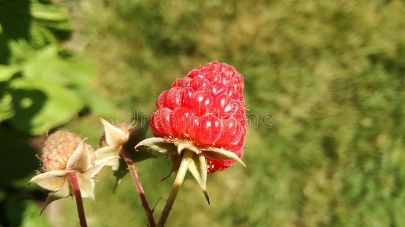 la flor checa come el mejor fantástico foto de archivo libre de regalías