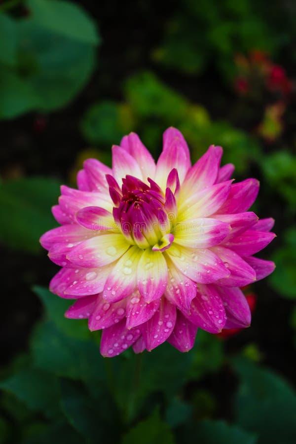 La flor colorida fotos de archivo