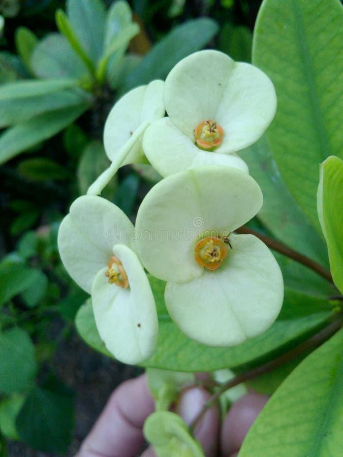 La flor del beutifull fotos de archivo libres de regalías