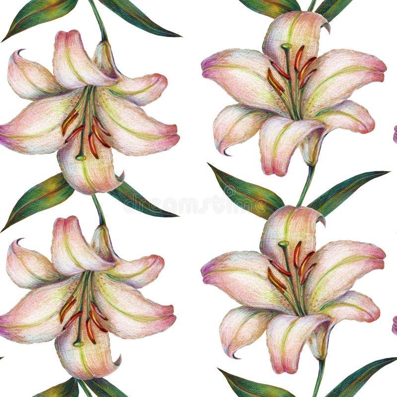 La flor del lirio blanco, lápiz del color, modela inconsútil libre illustration