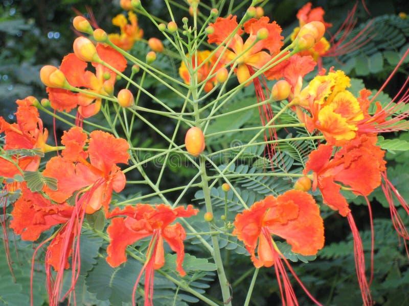 La flor en Ciudad de México foto de archivo libre de regalías