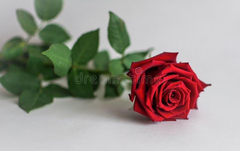 La flor en el fondo imágenes de archivo libres de regalías