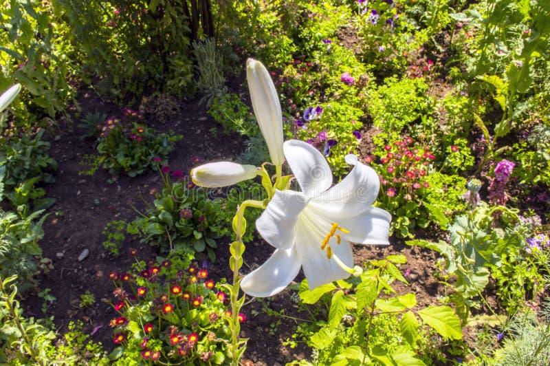 La flor en el jardín fotos de archivo