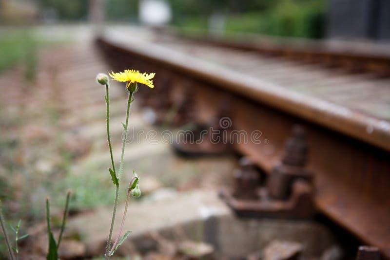 La flor en el lado foto de archivo