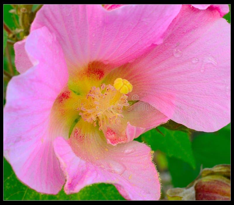 La flor hermosa imagen de archivo