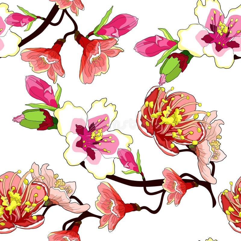 La flor inconsútil de la rama del modelo de la almendra florece Vector IL ilustración del vector